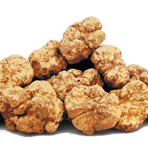 white_truffle_HT