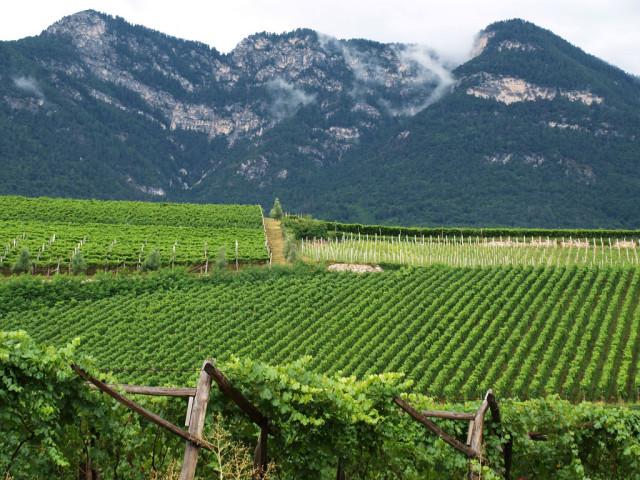South-Tyrol-vineyard