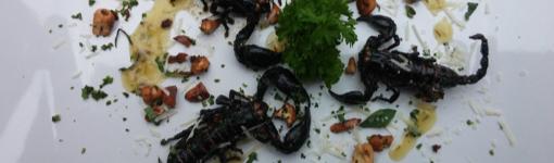 scorpion dinner