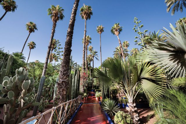 Jardin Majorelle. Photo by Alan Keohane