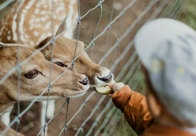 zoo animal care